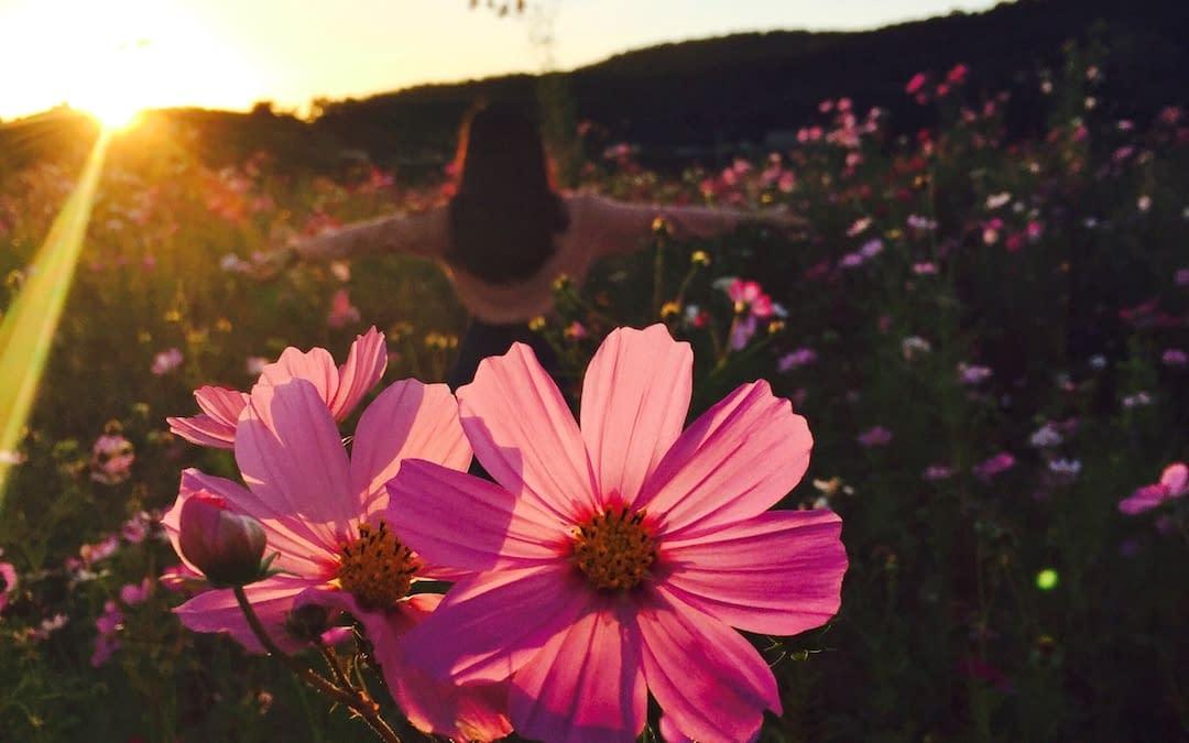 flowers sun woman