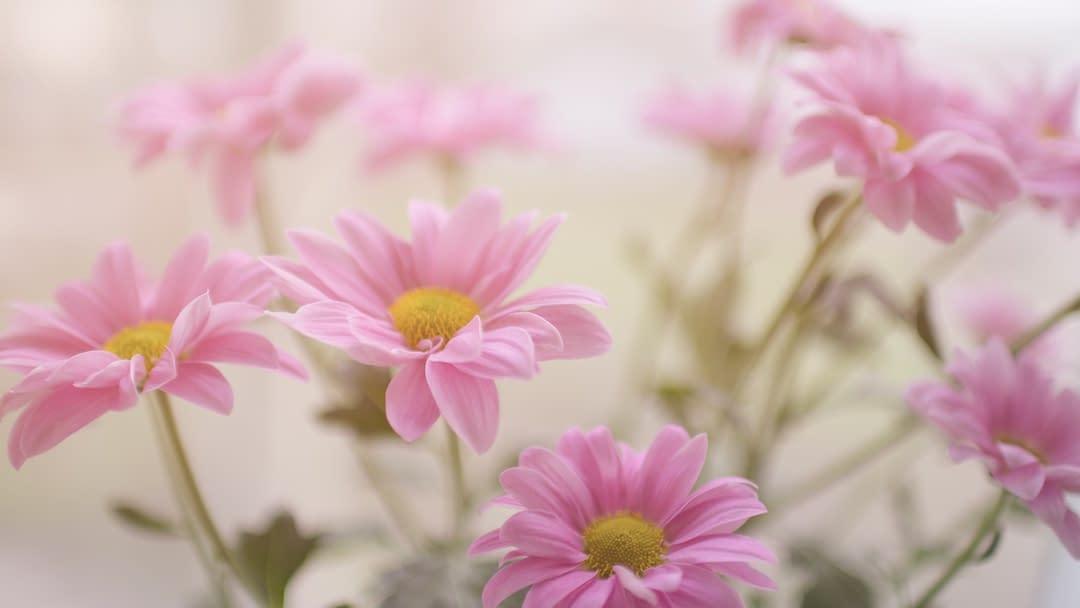 multiple flowers